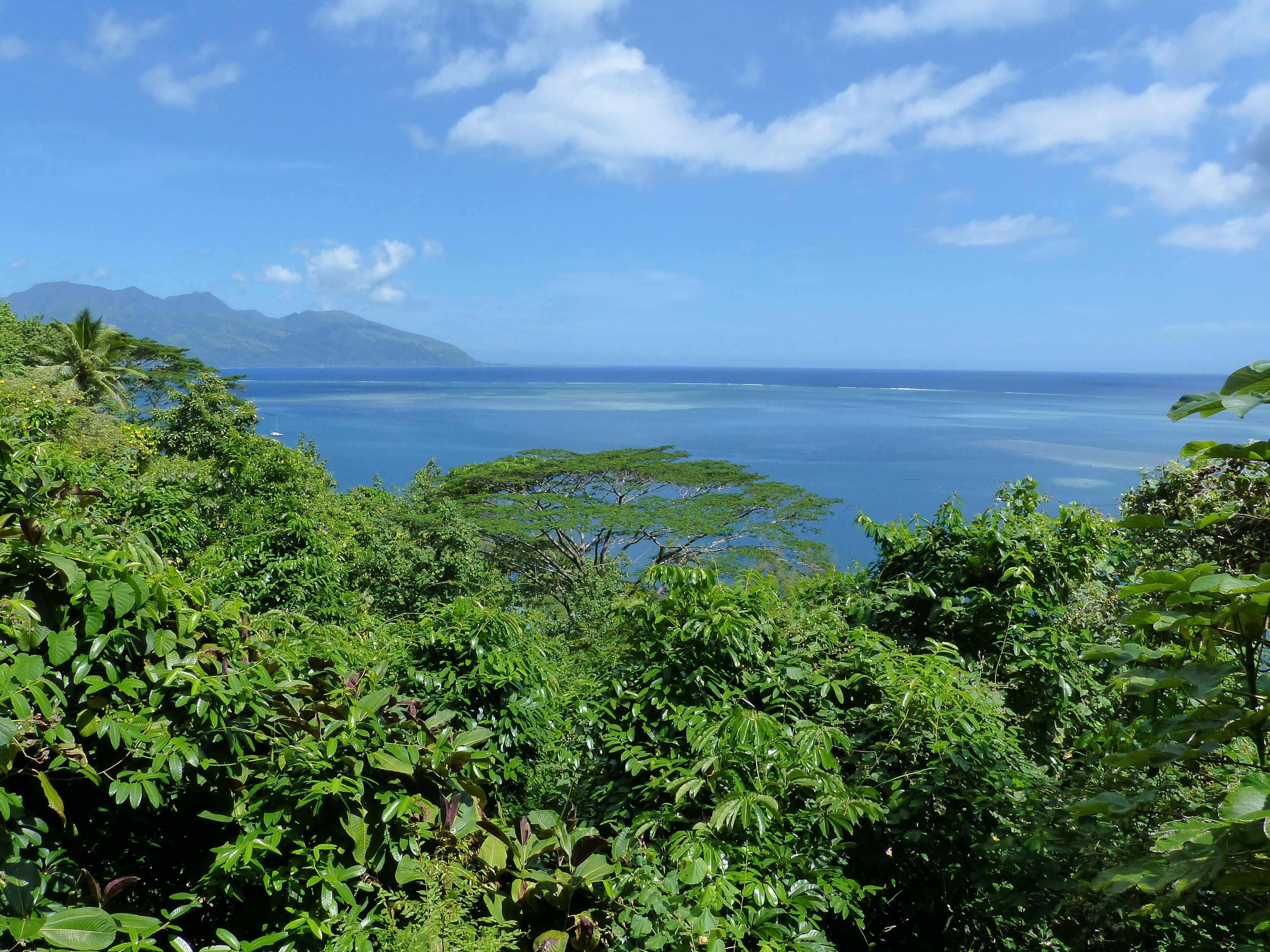 3-Tahiti iti