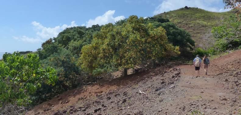 HT vegetation 2