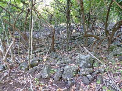 HT vegetation