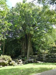 NH Hatiheu tohua kamuihei arbre