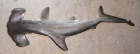 Requin Marteau 1